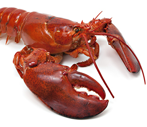 «Flipper», la sonde inspirée de la cuisson du homard