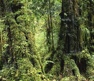 La biodiversité des forêts n'est pas toujours un atout pour capturer le CO2