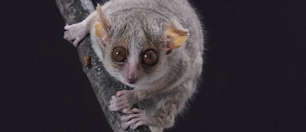 Tous les primates du monde partagent la même vision